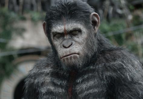 Caesar-looks-grumpy